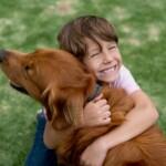 benefícios de ter animais de estimação